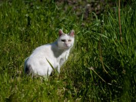 Cat on the grass by 75ronin