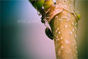 Arse-lickre by geckokid