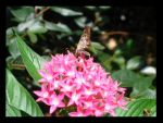 Moth on Flower SEQUEL by adasd