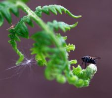 Fly and fern by rattlebrain