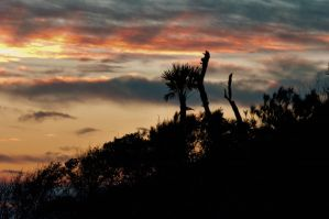 Sunrise Silhouettes by Carise