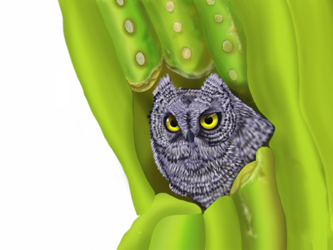 Desert owl hide in cactus (step by step 3) by gusvader