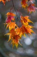 Autumn colours 7 by AngiWallace