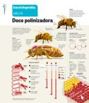 Bees infographic by pauloomarcio