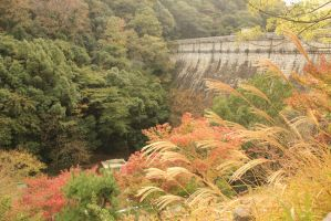 Fall at the Dam by rayna23