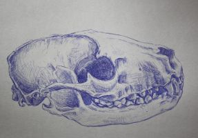 racoon skull in blue by SwarzezTier