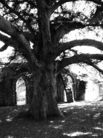 Old tree by spiderkazz