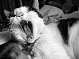 Black and white Yawn by oozsinfered