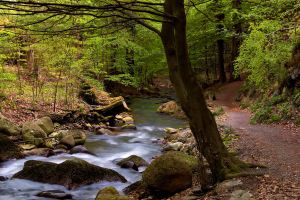 ilsetal at Harz by stg123