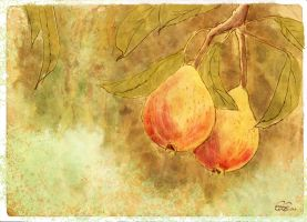 Pears by Brightstone