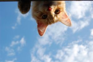 Cat in the sky ... by daenuprobst