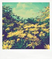Sunshine Polaroid by Whimsical-Dreams