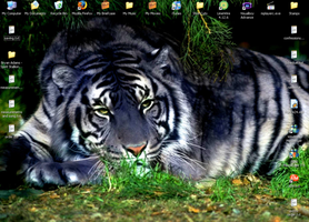 Maltese Tiger Wallpaper by KTstamps