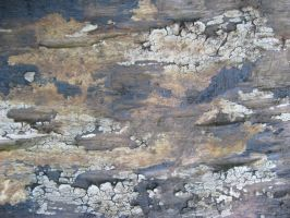 Grunge Wood 11 by irrealist-stock