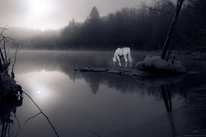 Unicorn Photo Manipulation by ScintillaOfEternity