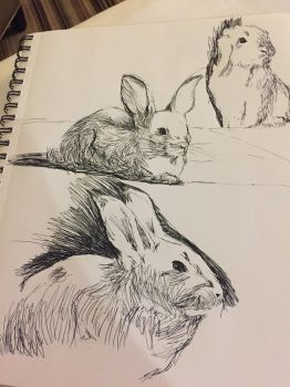 Bunny Studies by Hmelliott1515