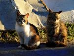 Two cats by Kittengrapher