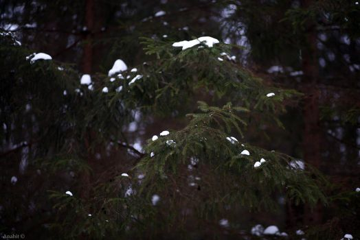 Winter forest firs snow by VAMPIdor