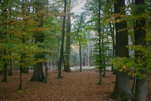ForestStock03 by JaneDoeStock