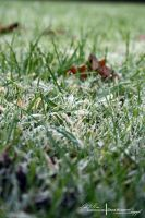 Frosted Grass. by ElementaryDearWatson