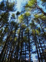 Cathedral of Pines by KDMB