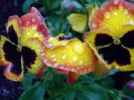 Colorful Raindrops by AlexandriaMayTaylor