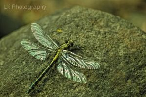 new born dragonfly II by Lk-Photography