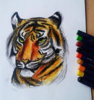 Tiger with Oil Pastels by NikkouViolet