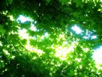 Green by MadxHatter666