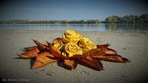 Leaves rose from Hungary by tamas kanya by tom-tom1969