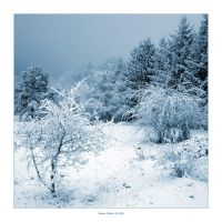 Blue Winter II by Frider