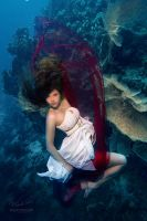 Underwater Dace. Fashionable by Vitaly-Sokol