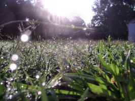 Morning Dew by Tater-Munch