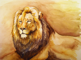 Lion Study by oORustedSilverOo