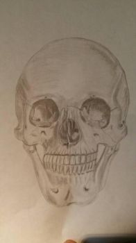 skull by Hmcmurray