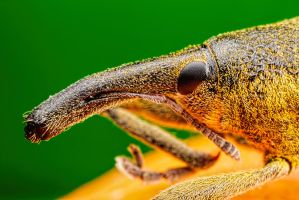 Winter Weevil Series 1-2 by dalantech