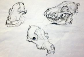 Animal Skulls by MuseInOnlyColors