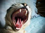 yawn by thais-fb