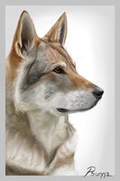 Photorealism Wolf drawing by Psunna