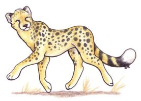 Adwin Cheetah by Korrok