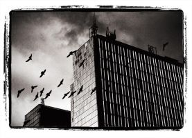The Birds by Jimpawa