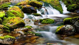 Green brook II by mutrus
