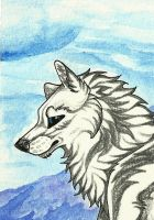 Wolf ACEO by RedSoulWolf13