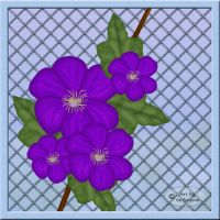 Clematis by terforpova