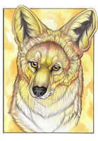 Golden Coyote by MorRokko