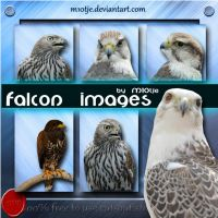 Falcon png's by M10tje