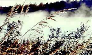 Frosty Grass In February Foggy Air by eskile