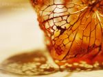 Physalis by SoLoveIsPunk