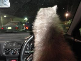 Cat Driving. by ryn004