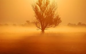 Golden Morning by markborbely